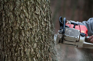 Maintain Your Trees by Hiring Tree Service Professionals